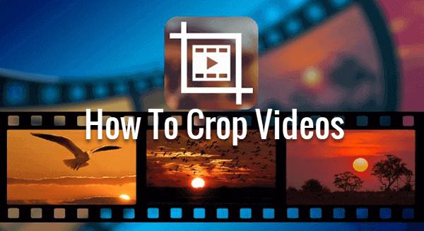 Top Video Cropper